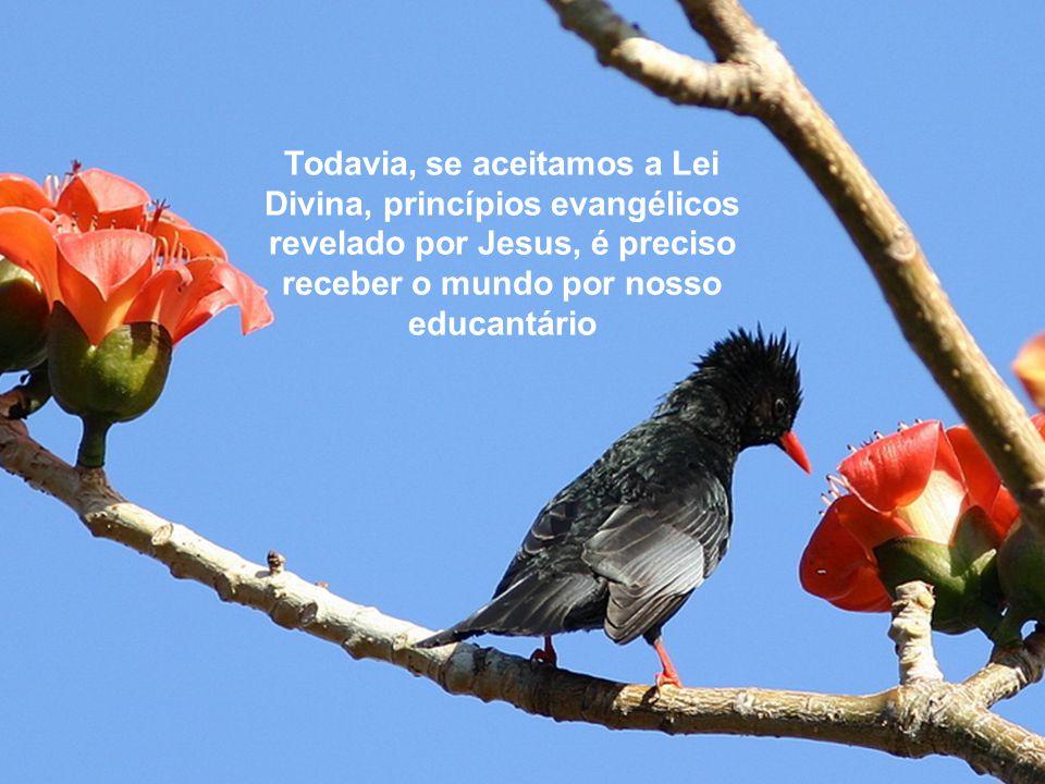Todavia, se aceitamos a Lei Divina, princípios evangélicos revelado por Jesus, é preciso receber o mundo por nosso educantário