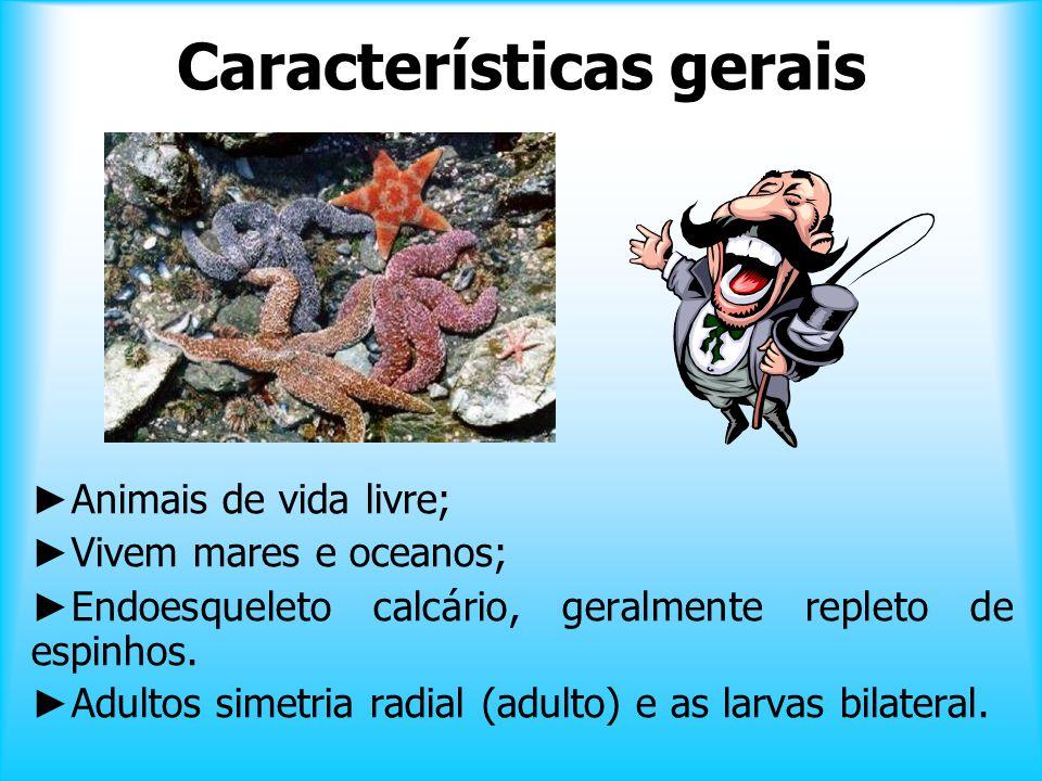 Os equinodermas (gr. echinos = ouriço + derma = pele) constituem um dos filos mais distintos e facilmente reconhecíveis do reino animal, sendo abundan