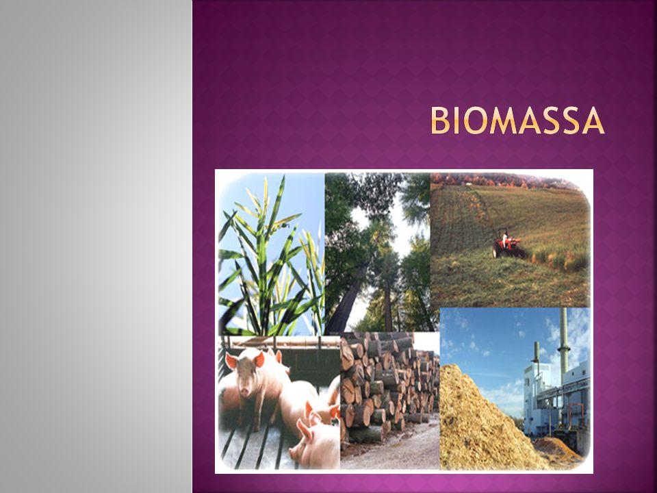  Do ponto de vista da geração de energia, o termo biomassa abrange os derivados recentes de organismos vivos utilizados como combustíveis ou para a sua produção.
