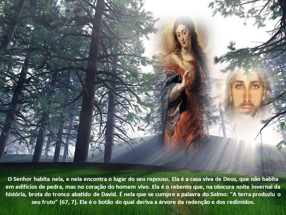 Em primeiro lugar, há a maravilhosa narração do anúncio a Maria, a Virgem de Nazaré, da vinda do Messias. A saudação do Anjo é tecida com fios do Anti