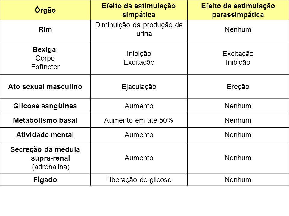 Rim Diminuição da produção de urina Nenhum Bexiga: Corpo Esfíncter Inibição Excitação Inibição Ato sexual masculinoEjaculaçãoEreção Glicose sangüíneaAumentoNenhum Metabolismo basalAumento em até 50%Nenhum Atividade mentalAumentoNenhum Secreção da medula supra-renal (adrenalina) AumentoNenhum FígadoLiberação de glicoseNenhum Órgão Efeito da estimulação simpática Efeito da estimulação parassimpática