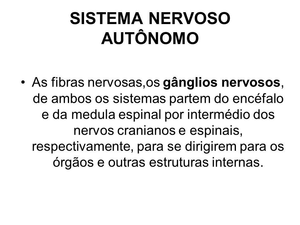 SISTEMA NERVOSO AUTÔNOMO As fibras nervosas,os gânglios nervosos, de ambos os sistemas partem do encéfalo e da medula espinal por intermédio dos nervos cranianos e espinais, respectivamente, para se dirigirem para os órgãos e outras estruturas internas.