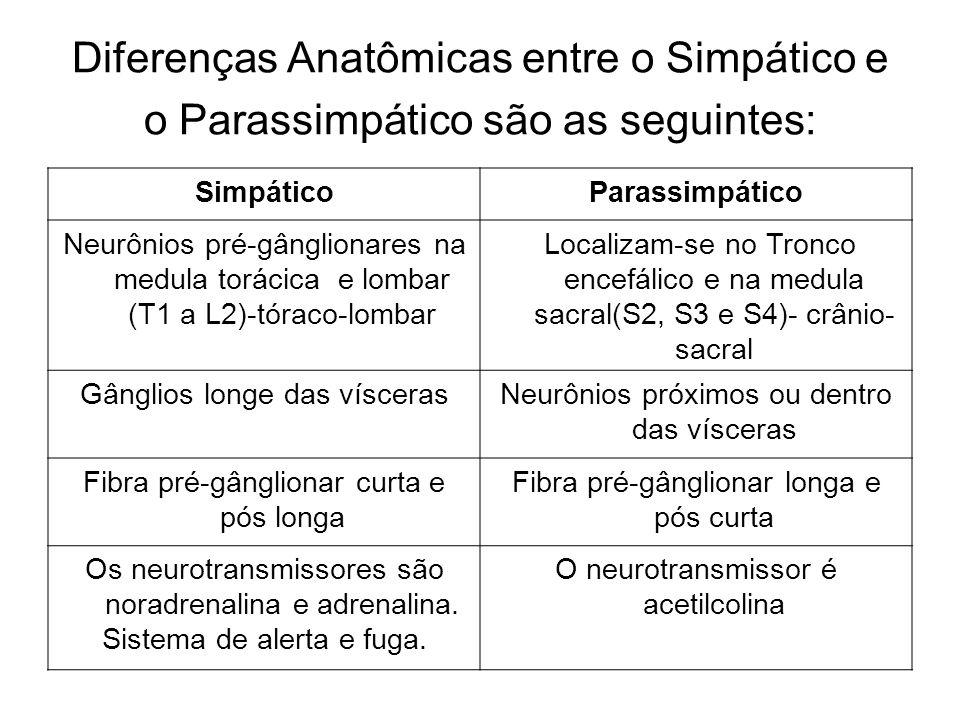 Diferenças Anatômicas entre o Simpático e o Parassimpático são as seguintes: SimpáticoParassimpático Neurônios pré-gânglionares na medula torácica e lombar (T1 a L2)-tóraco-lombar Localizam-se no Tronco encefálico e na medula sacral(S2, S3 e S4)- crânio- sacral Gânglios longe das víscerasNeurônios próximos ou dentro das vísceras Fibra pré-gânglionar curta e pós longa Fibra pré-gânglionar longa e pós curta Os neurotransmissores são noradrenalina e adrenalina.