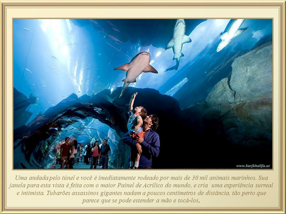 Para visitação desse Aquário, há um túnel com 48 metros de comprimento, inteiro de vidro e, quando se passa por ele, em todas as direções há tubarões