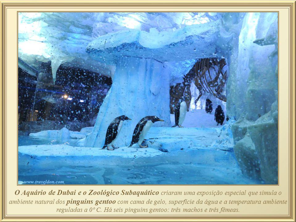 Junto ao Aquarium, se encontra o Ocean School com grande número de peixes da Amazônia, tanques com piranhas rodeados de vegetação amazônica artificial