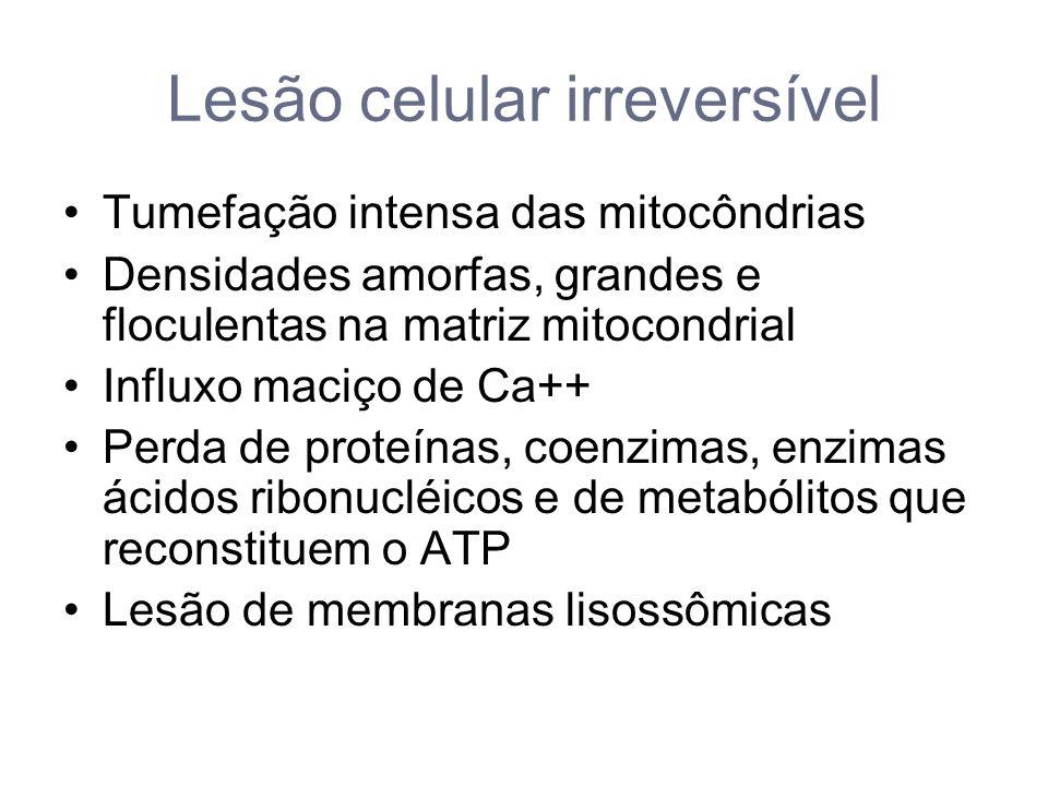 Lesão celular irreversível Ativação de RNases, DNases, proteases, fosfatases,, glicosidases e catepsinas.