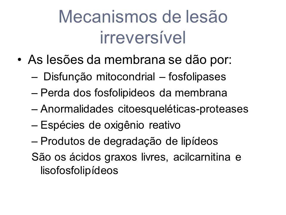 Mecanismos de lesão irreversível As lesões da membrana se dão por: – Disfunção mitocondrial – fosfolipases –Perda dos fosfolipideos da membrana –Anormalidades citoesqueléticas-proteases –Espécies de oxigênio reativo –Produtos de degradação de lipídeos São os ácidos graxos livres, acilcarnitina e lisofosfolipídeos