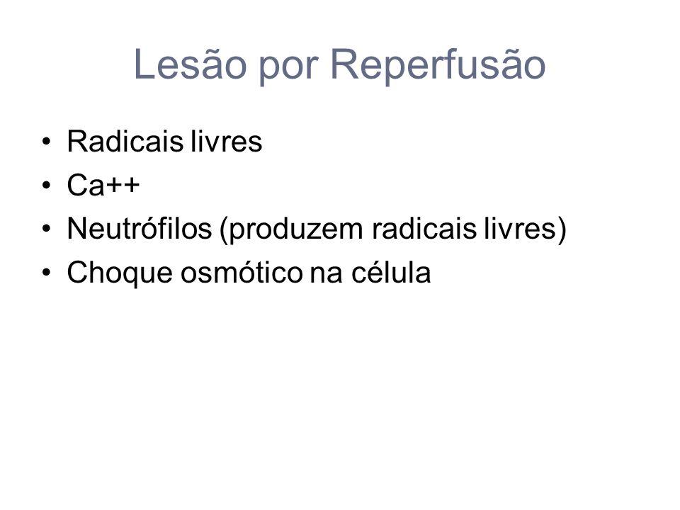 Lesão por Reperfusão Radicais livres Ca++ Neutrófilos (produzem radicais livres) Choque osmótico na célula