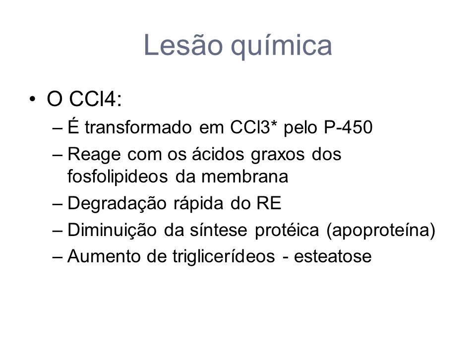 Lesão química O CCl4: –É transformado em CCl3* pelo P-450 –Reage com os ácidos graxos dos fosfolipideos da membrana –Degradação rápida do RE –Diminuição da síntese protéica (apoproteína) –Aumento de triglicerídeos - esteatose
