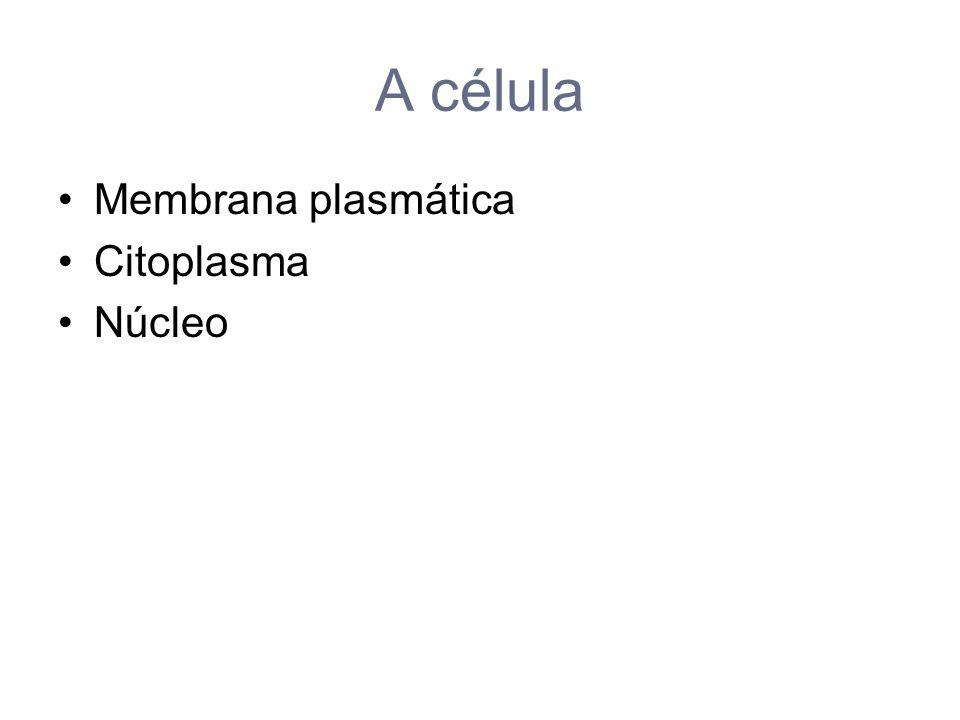 Organelas citoplasmáticas Mitocôndrias REL e RER Aparelho de Golgi Lisossomas e Peroxissomas