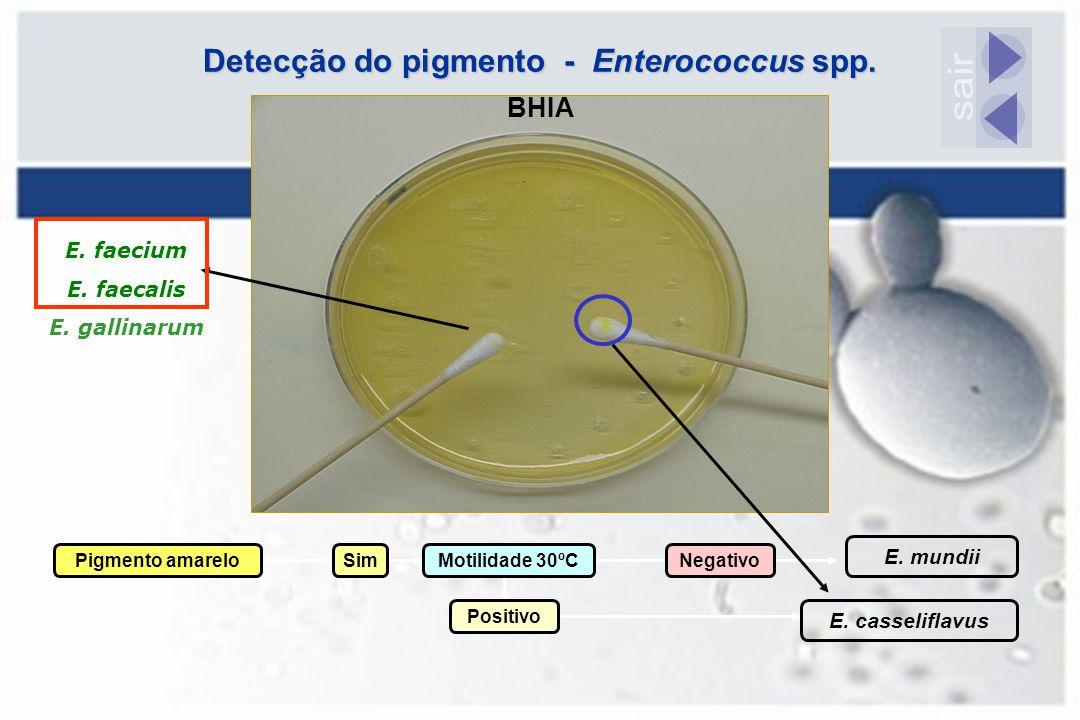 Detecção do pigmento - Enterococcus spp. Pigmento amareloSimMotilidade 30ºCNegativo E. mundii Positivo E. casseliflavus BHIA E. faecium E. faecalis E.