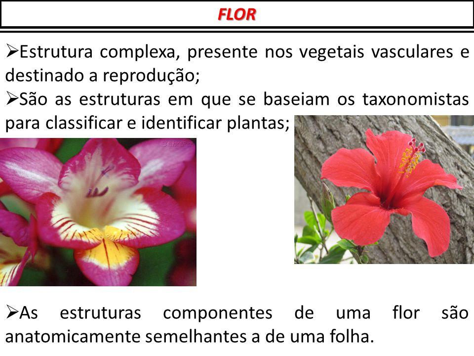  Estrutura complexa, presente nos vegetais vasculares e destinado a reprodução;  São as estruturas em que se baseiam os taxonomistas para classifica