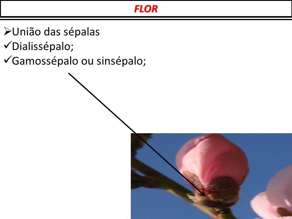  União das sépalas Dialissépalo; Gamossépalo ou sinsépalo; FLOR