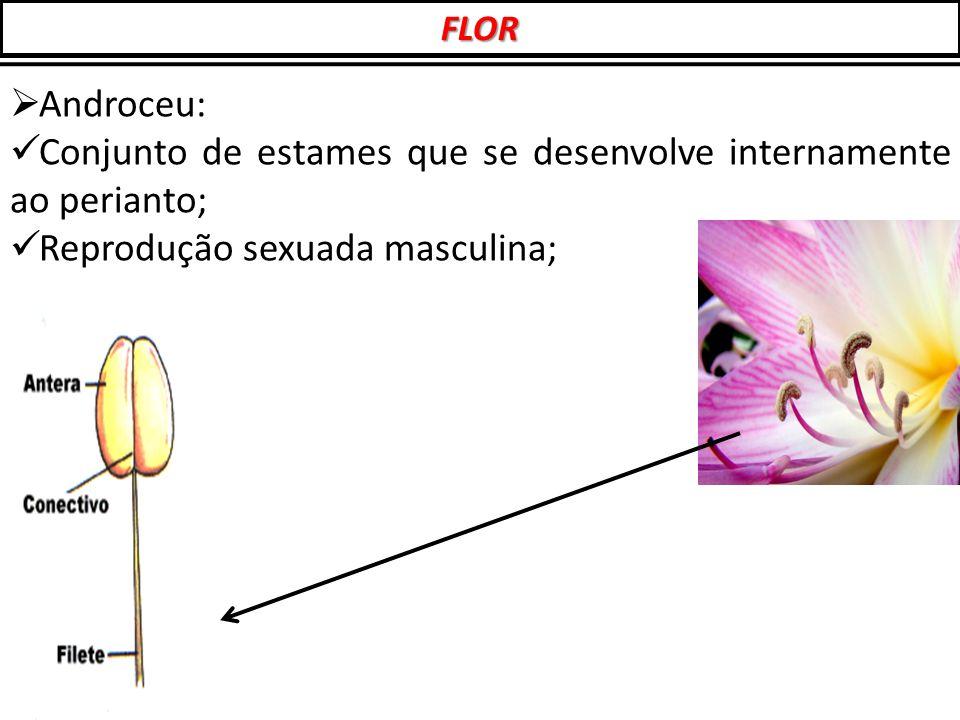  Androceu: Conjunto de estames que se desenvolve internamente ao perianto; Reprodução sexuada masculina; FLOR