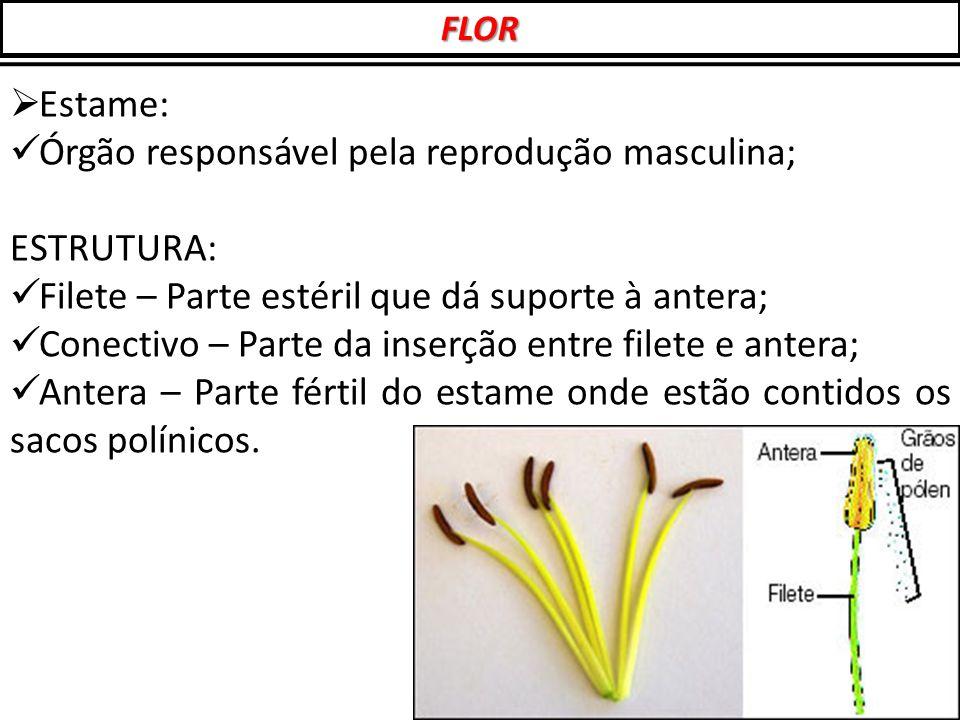  Estame: Órgão responsável pela reprodução masculina; ESTRUTURA: Filete – Parte estéril que dá suporte à antera; Conectivo – Parte da inserção entre