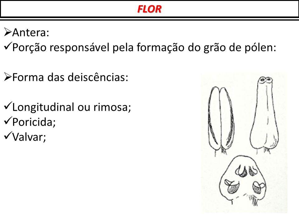  Antera: Porção responsável pela formação do grão de pólen:  Forma das deiscências: Longitudinal ou rimosa; Poricida; Valvar; FLOR