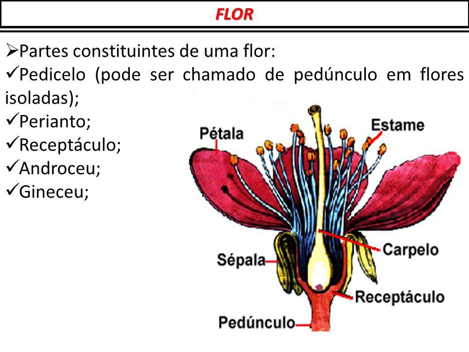  Partes constituintes de uma flor: Pedicelo (pode ser chamado de pedúnculo em flores isoladas); Perianto; Receptáculo; Androceu; Gineceu; FLOR