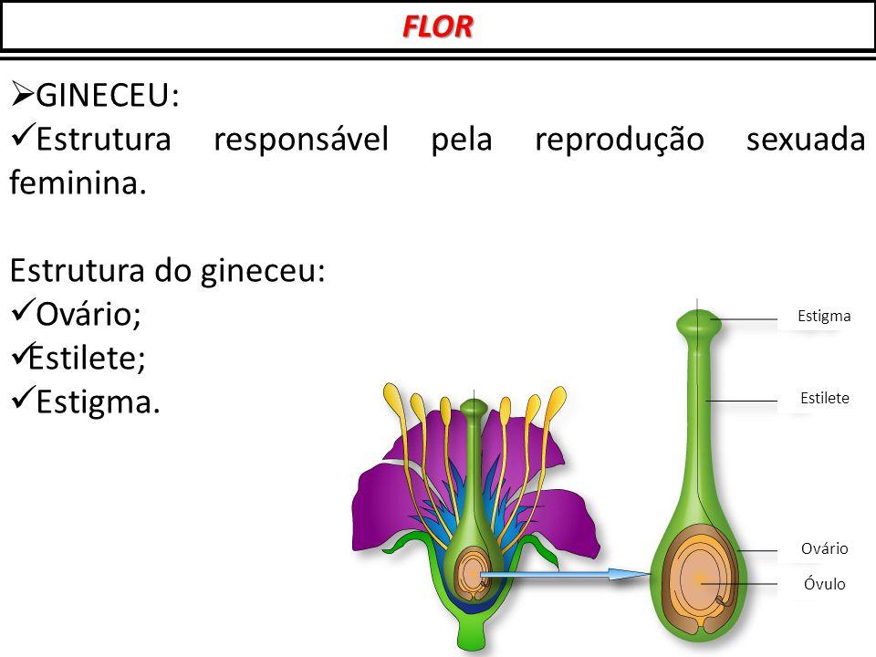  GINECEU: Estrutura responsável pela reprodução sexuada feminina. Estrutura do gineceu: Ovário; Estilete; Estigma. Estigma Estilete Ovário Óvulo FLOR