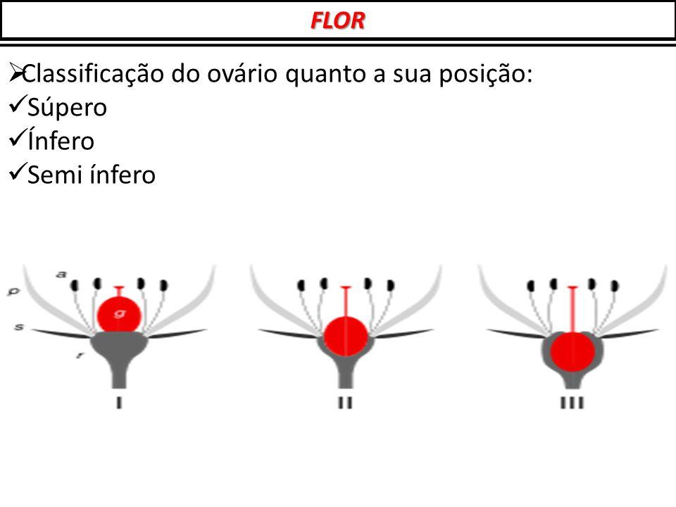  Classificação do ovário quanto a sua posição: Súpero Ínfero Semi ínfero FLOR