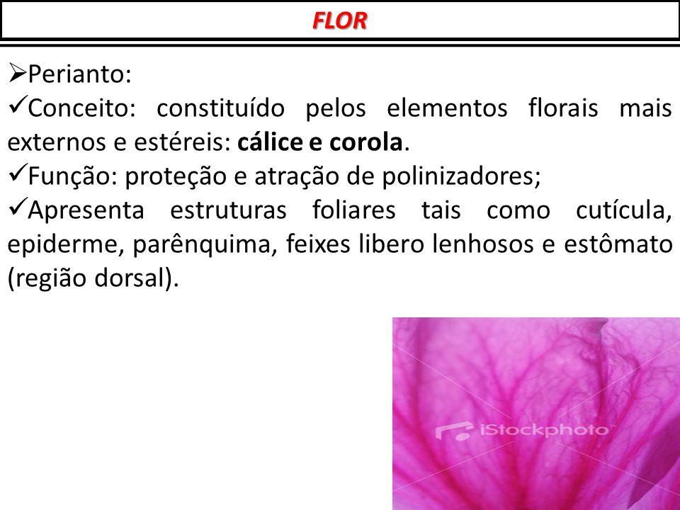  Perianto: Conceito: constituído pelos elementos florais mais externos e estéreis: cálice e corola. Função: proteção e atração de polinizadores; Apre