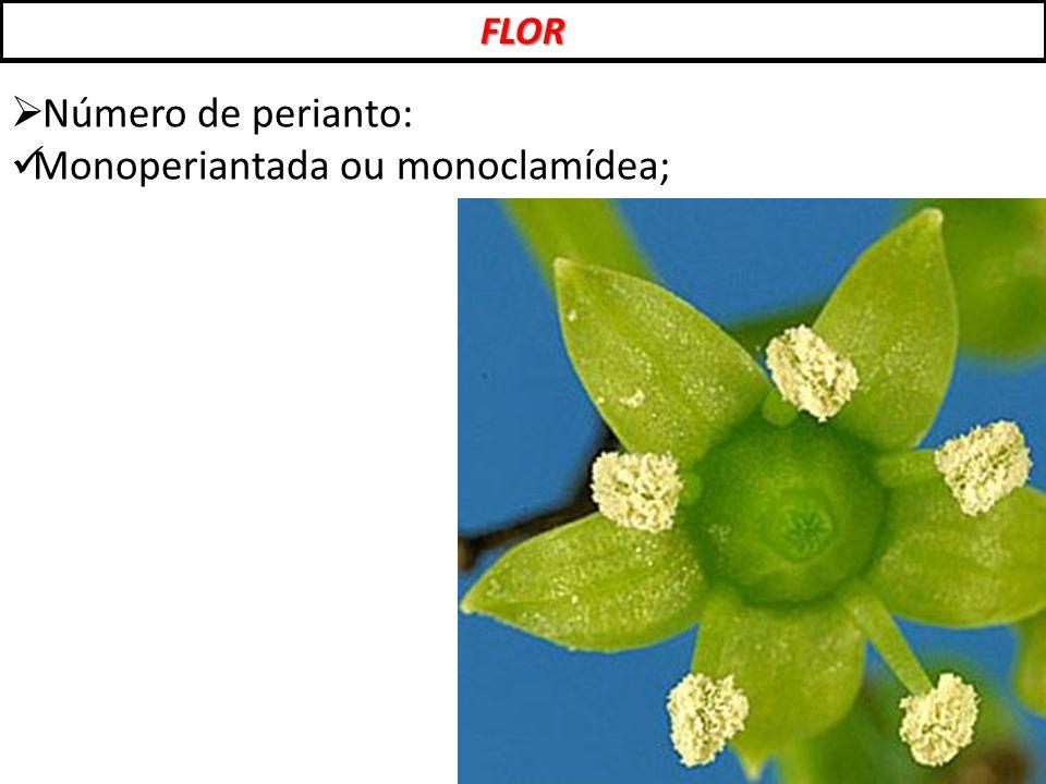 FLOR  Número de perianto: Monoperiantada ou monoclamídea;