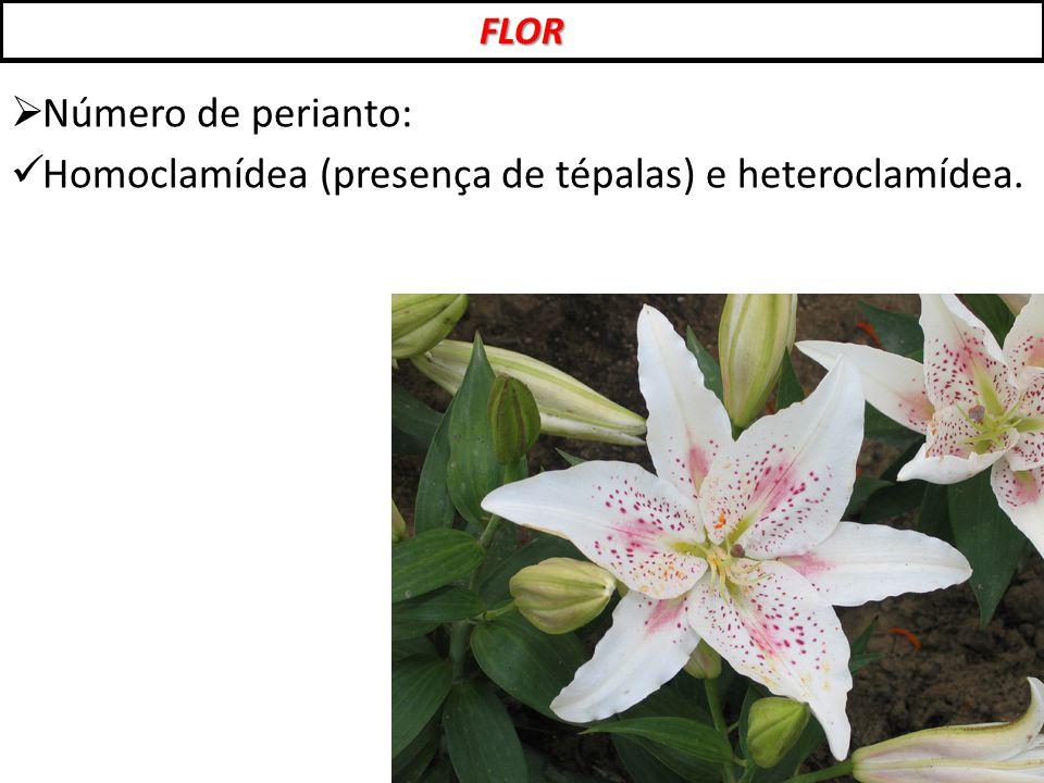  Número de perianto: Homoclamídea (presença de tépalas) e heteroclamídea. FLOR