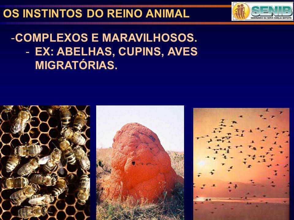 OS INSTINTOS DO REINO ANIMAL -COMPLEXOS E MARAVILHOSOS. -EX: ABELHAS, CUPINS, AVES MIGRATÓRIAS.