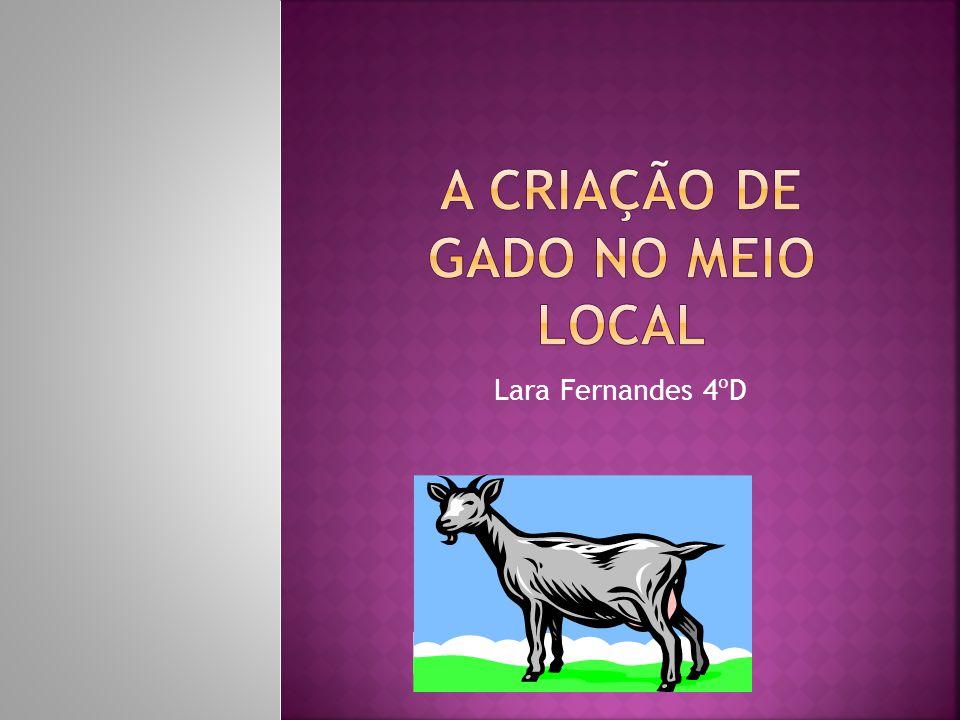 Lara Fernandes 4ºD