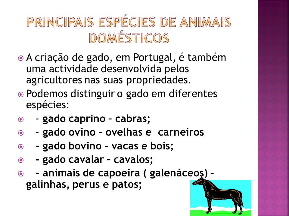  A criação de gado, em Portugal, é também uma actividade desenvolvida pelos agricultores nas suas propriedades.  Podemos distinguir o gado em difere