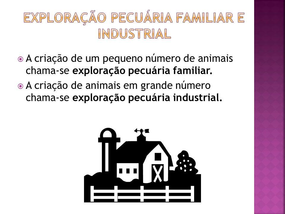 A criação de um pequeno número de animais chama-se exploração pecuária familiar.  A criação de animais em grande número chama-se exploração pecuári
