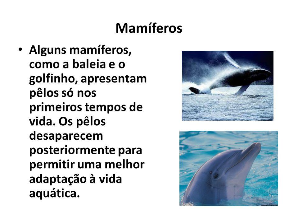 Mamíferos Alguns mamíferos, como a baleia e o golfinho, apresentam pêlos só nos primeiros tempos de vida. Os pêlos desaparecem posteriormente para per