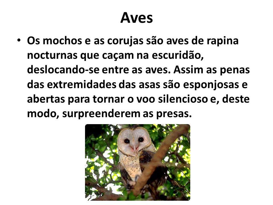 Aves Os mochos e as corujas são aves de rapina nocturnas que caçam na escuridão, deslocando-se entre as aves.