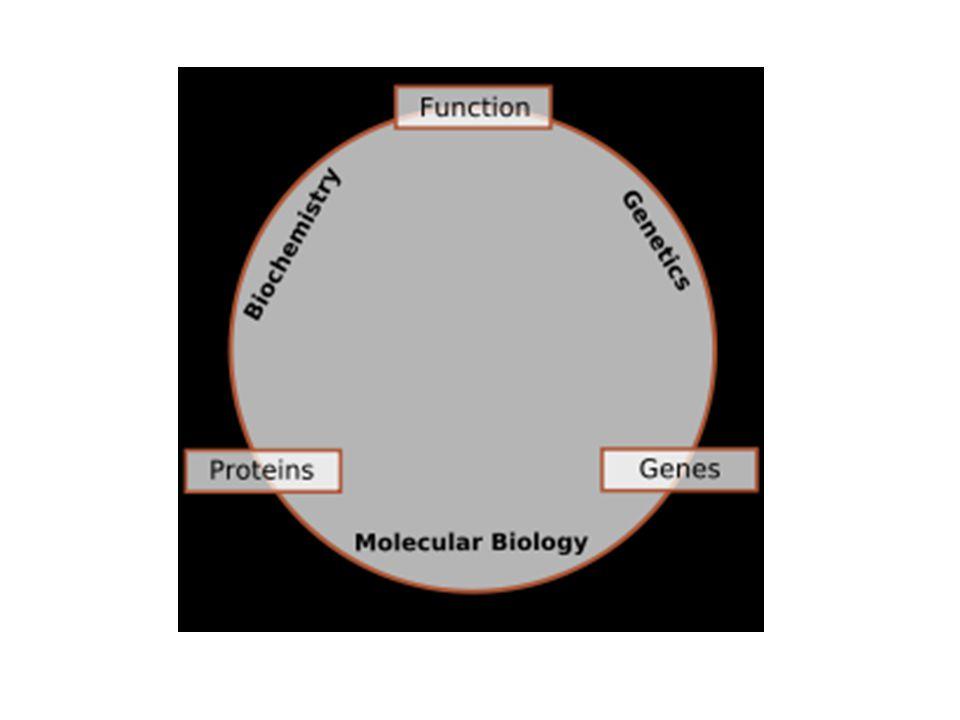 Há 4 tipos de estruturas da cadeia polipeptídica: Estrutura primária: É dada pela seqüência de aminoácidos de estrutura mais simples e mais importante, pois dele deriva todo o arranjo espacial da molécula.