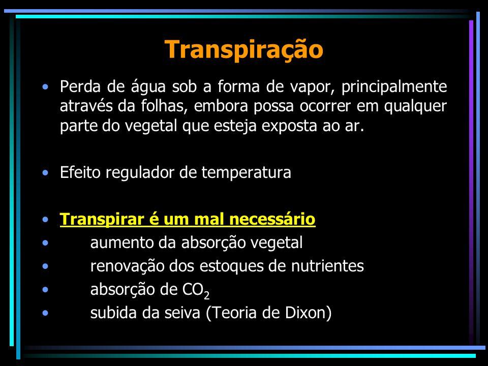 Mecanismos da transpiração Pode ocorrer através dos estômatos (estomática) e da cutícula (cuticular)