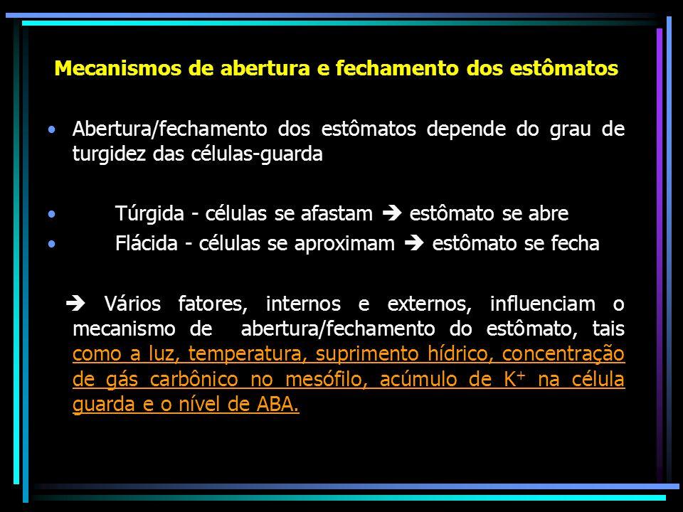 Abertura Fechamento - luz - escuro - baixo teor de CO 2 - alto teor de CO2 - temperatura moderada - temperatura extrema - bom suprimento hídrico - baixo suprimento hídrico - Acúmulo de K+ (guarda) - saída de K+ (guarda) - Baixa produção do ABA - alta produção de ABA