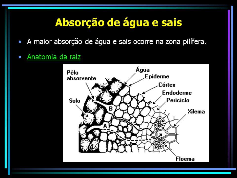Absorção dos sais –Inicia-se rapidamente onde os íons atravessam a parede celular de modo passivo auxiliados pela difusão da água.