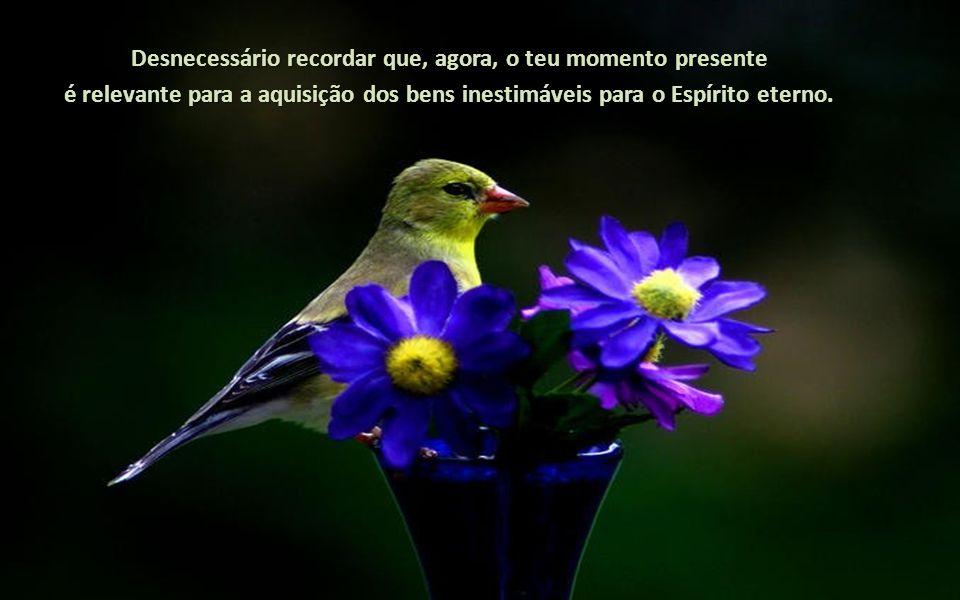 Desnecessário recordar que, agora, o teu momento presente é relevante para a aquisição dos bens inestimáveis para o Espírito eterno.