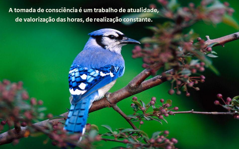 A tomada de consciência é um trabalho de atualidade, de valorização das horas, de realização constante.