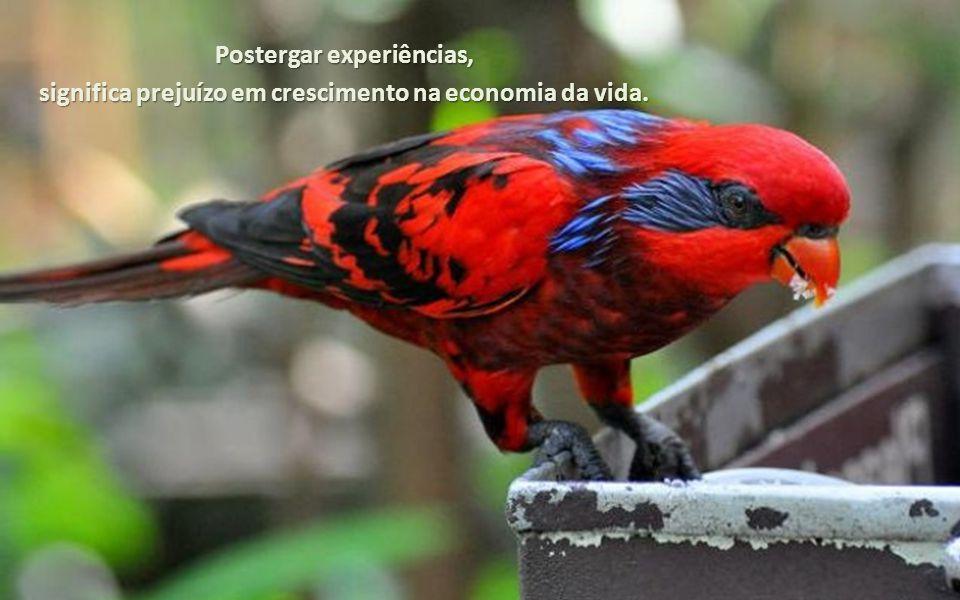 Postergar experiências, significa prejuízo em crescimento na economia da vida.
