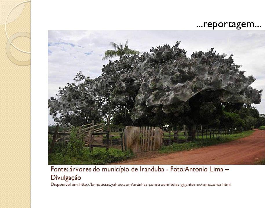 Fonte: árvores do município de Iranduba - Foto:Antonio Lima – Divulgação Disponível em: http://br.noticias.yahoo.com/aranhas-constroem-teias-gigantes-