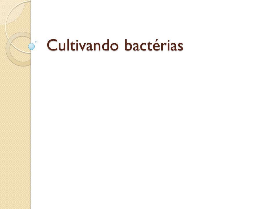 Cultivando bactérias