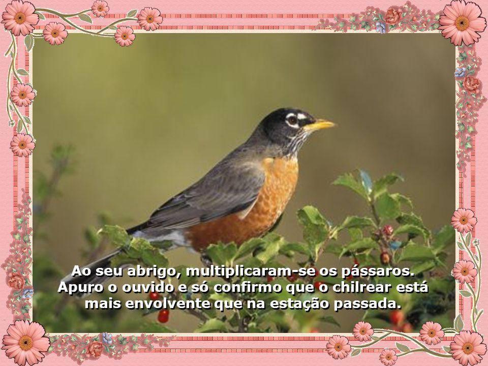 Ao seu abrigo, multiplicaram-se os pássaros.