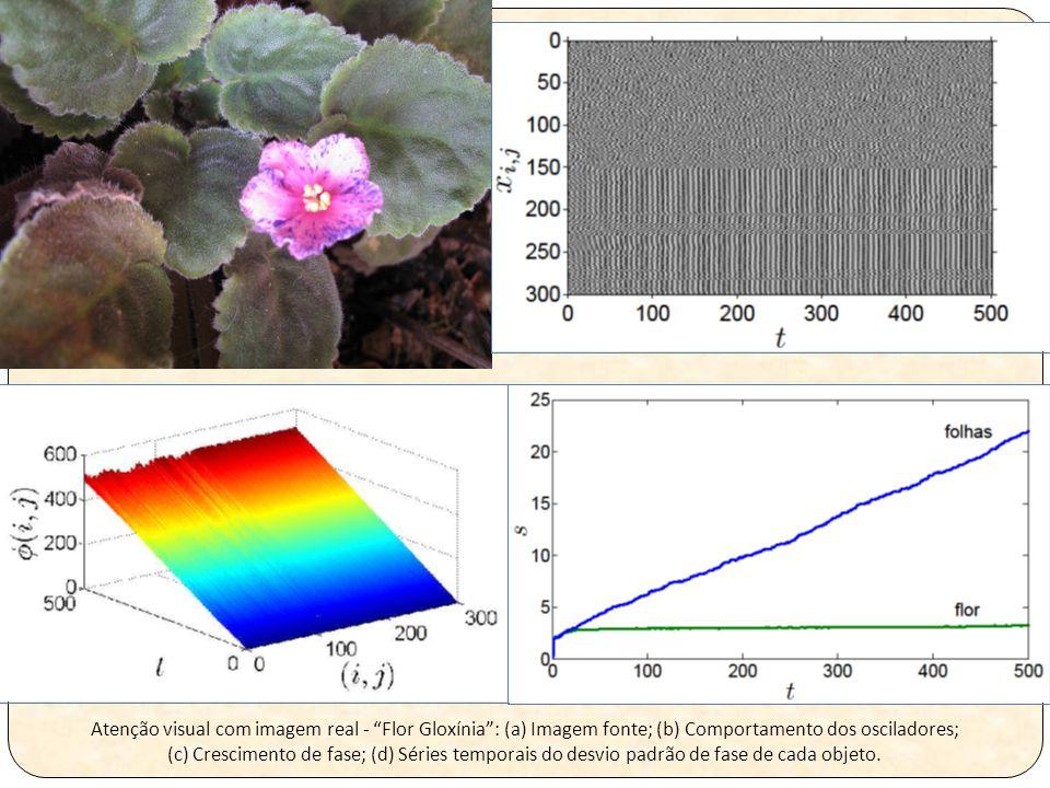Atenção visual com imagem real - Flor Gloxínia : (a) Imagem fonte; (b) Comportamento dos osciladores; (c) Crescimento de fase; (d) Séries temporais do desvio padrão de fase de cada objeto.
