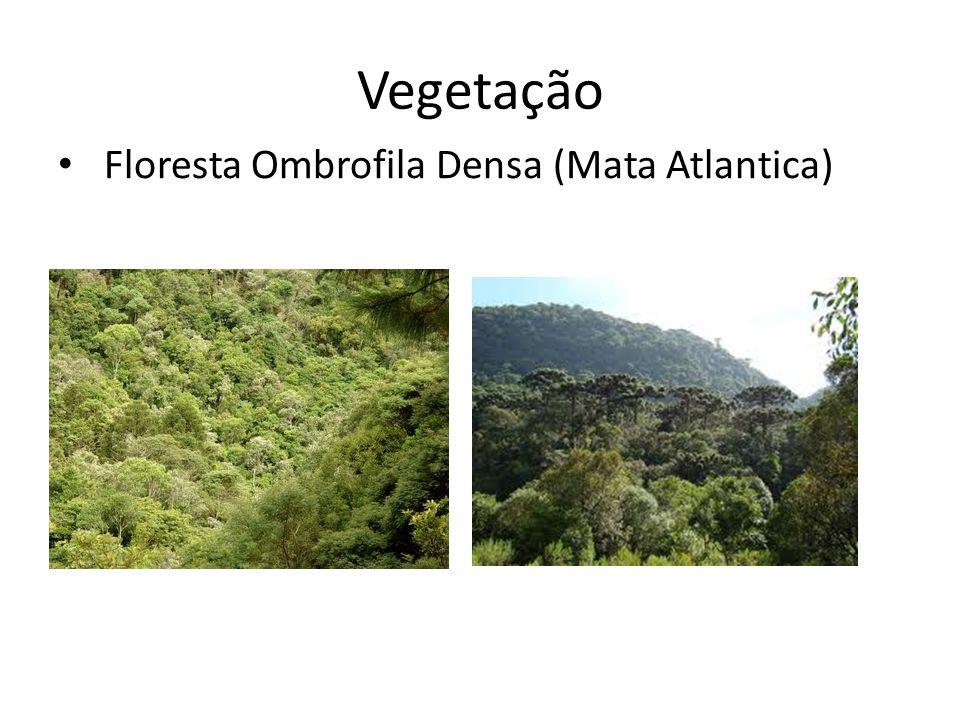 Vegetação Floresta Ombrofila Densa (Mata Atlantica)