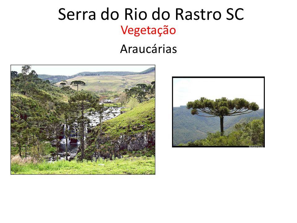 Serra do Rio do Rastro SC Vegetação Araucárias