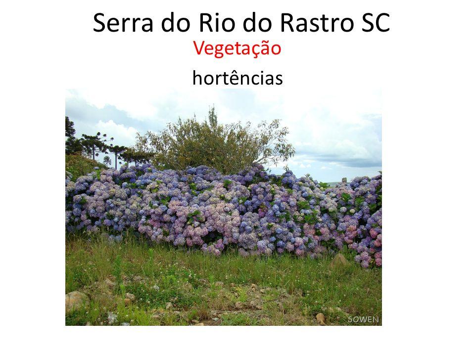 Serra do Rio do Rastro SC Vegetação hortências