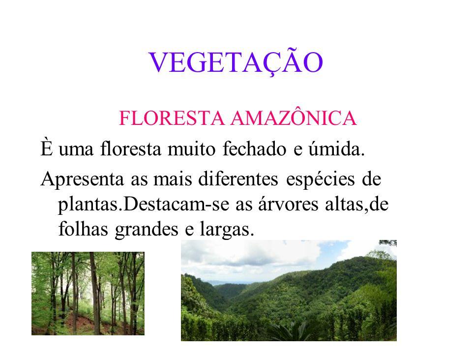 ESTADOS E CAPITAIS ACRE: RIO BRANCO PARÁ:BELEM TOCANTINS:PALMAS RORAIMA:BOA VISTA AMAPÁ:MACAPÁ AMAZONAS:MANAUS RONDONIA:PORTO VELHO PALMAS BELÉM RIO B