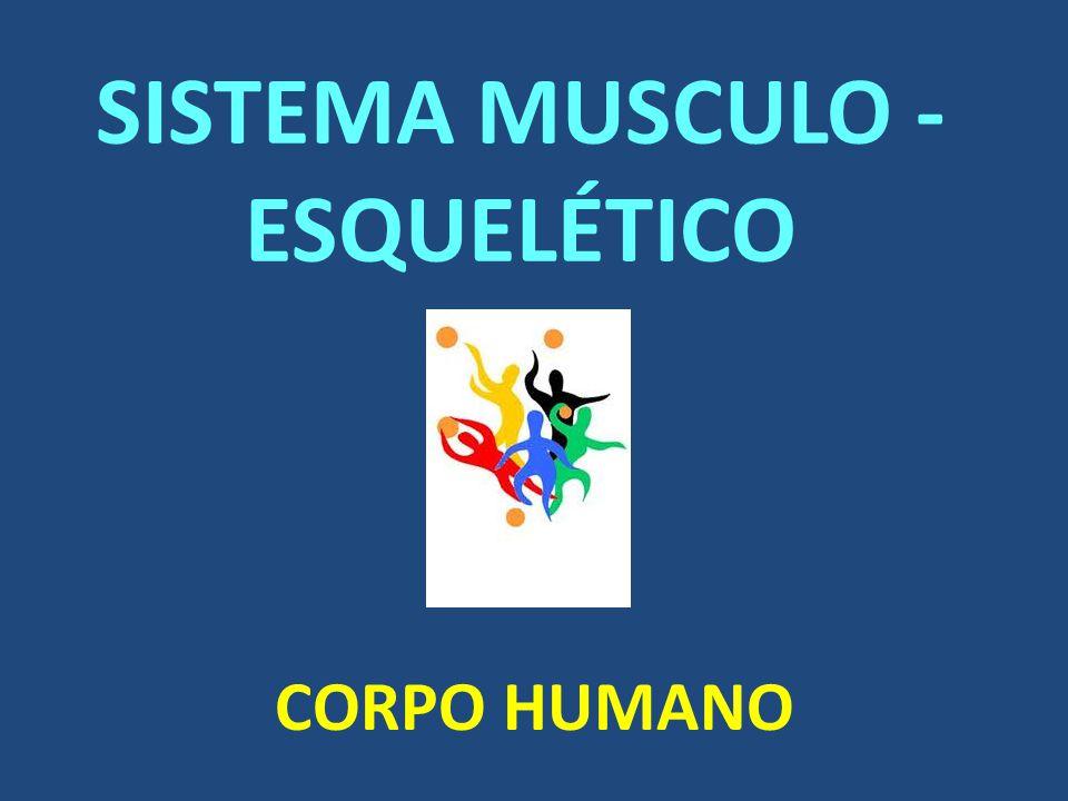 SISTEMA MUSCULO - ESQUELÉTICO CORPO HUMANO