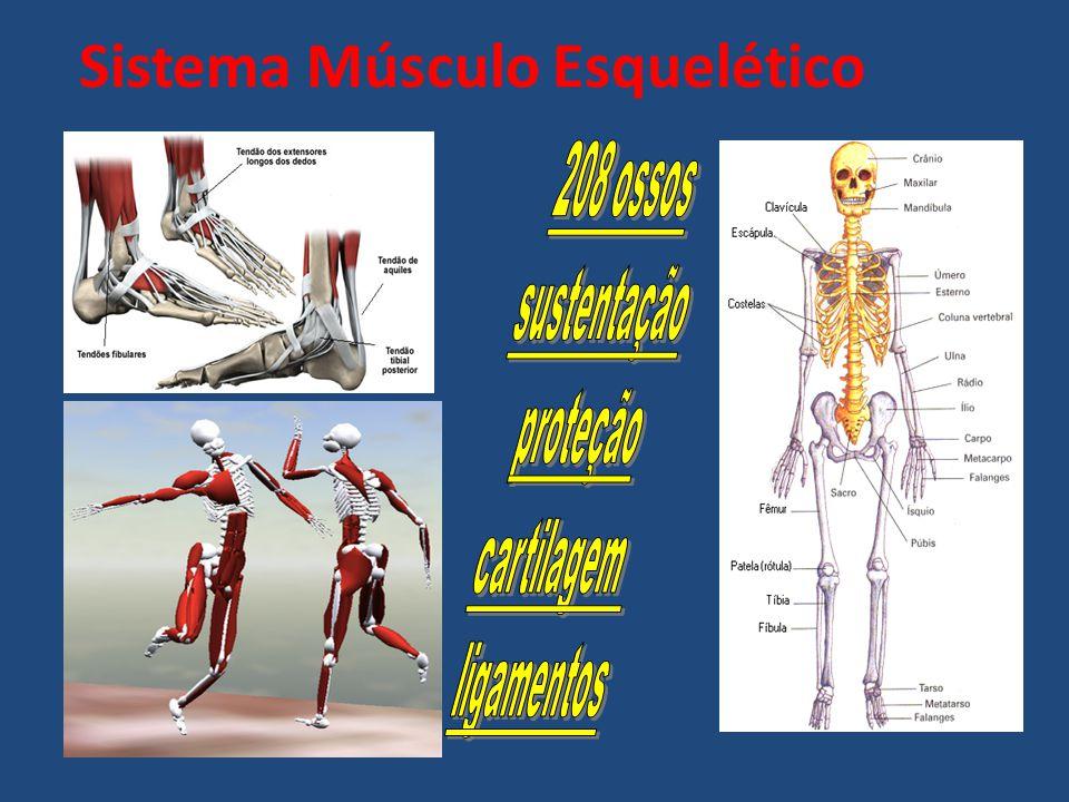 Exemplos de Lesões Desportivas Tendinites – Inflamação dos tendões ; Rotura Muscular – Rotura de parte ou totalidade de fibras musculares ; Cãimbras - Tensão muscular ; Entorses – Estiramento de ligamentos ; Mialgias – Dores musculares ; Contraturas – encurtamento de um músculo que provoca dor e aumento do volume muscular e pode causar inflamação ;