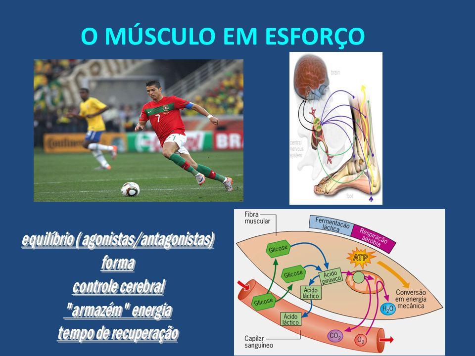 Músculos Contracturas musculares Roturas ( microruturas ) Articulações / Ligamentos Entorses, luxações R I C E Cuidado com uso e abuso dos anti-inflamatórios.